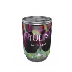 Tulip in a can violet